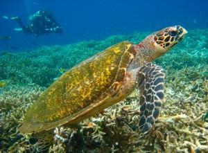 turtle, tatawa besar